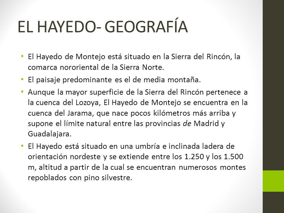 EL HAYEDO- GEOGRAFÍA El Hayedo de Montejo está situado en la Sierra del Rincón, la comarca nororiental de la Sierra Norte.