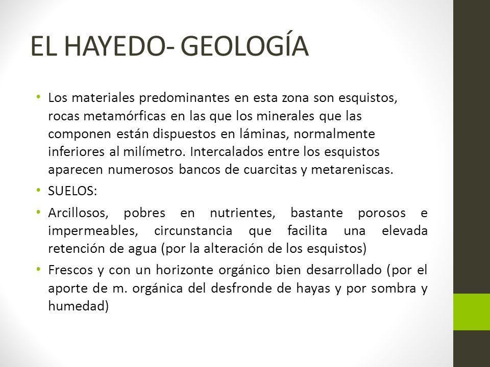 EL HAYEDO- GEOLOGÍA