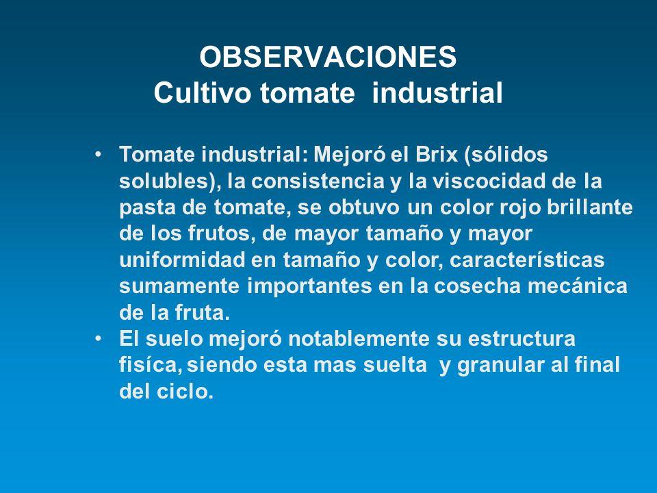 OBSERVACIONES Cultivo tomate industrial