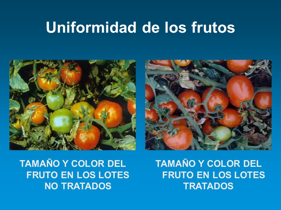 Uniformidad de los frutos