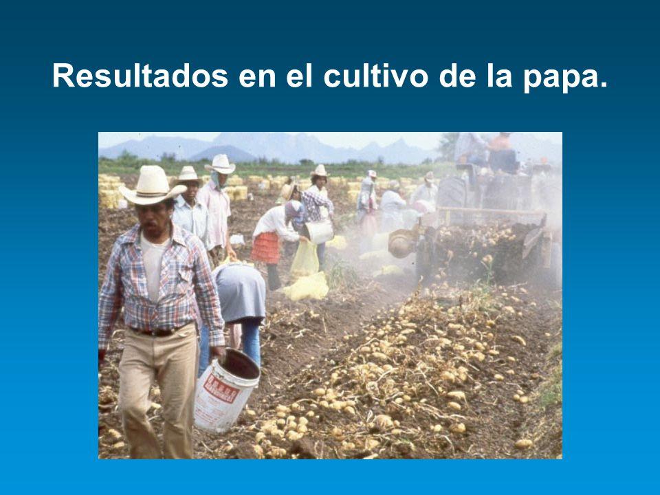 Resultados en el cultivo de la papa.
