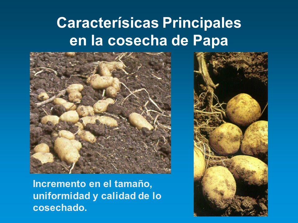Caracterísicas Principales en la cosecha de Papa