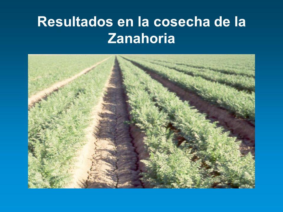 Resultados en la cosecha de la Zanahoria