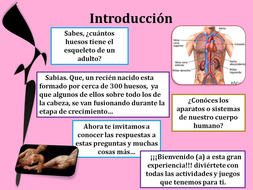 Introducción Sabes, ¿cuántos huesos tiene el esqueleto de un adulto