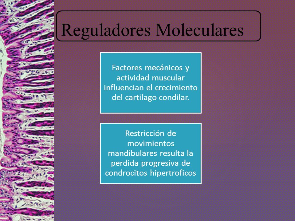 Reguladores Moleculares