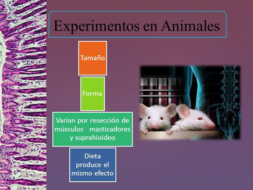 Experimentos en Animales