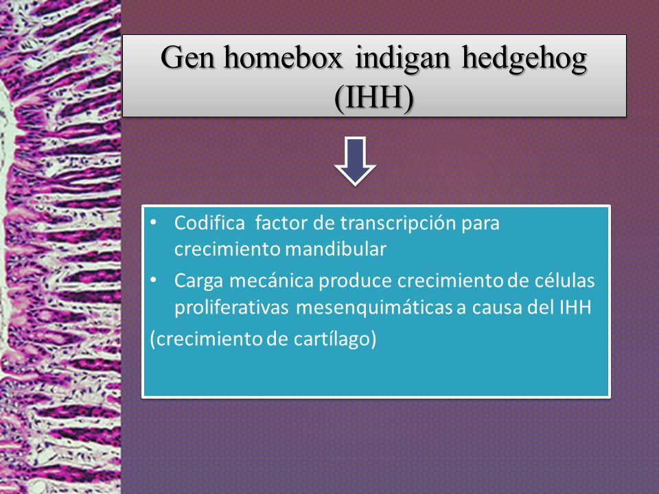 Gen homebox indigan hedgehog (IHH)