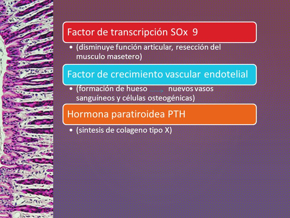 Factor de transcripción SOx 9