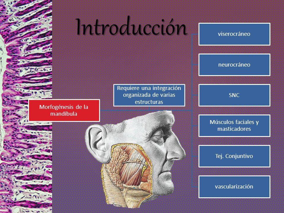 Introducción viserocráneo neurocráneo