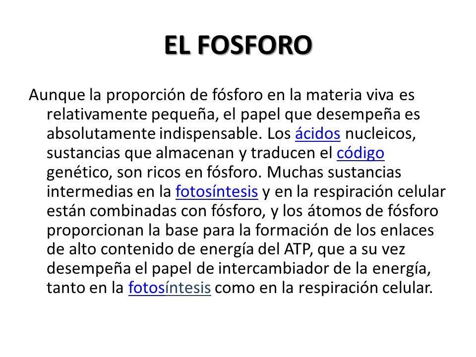 EL FOSFORO