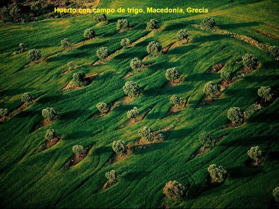 Huerto con campo de trigo, Macedonia, Grecia