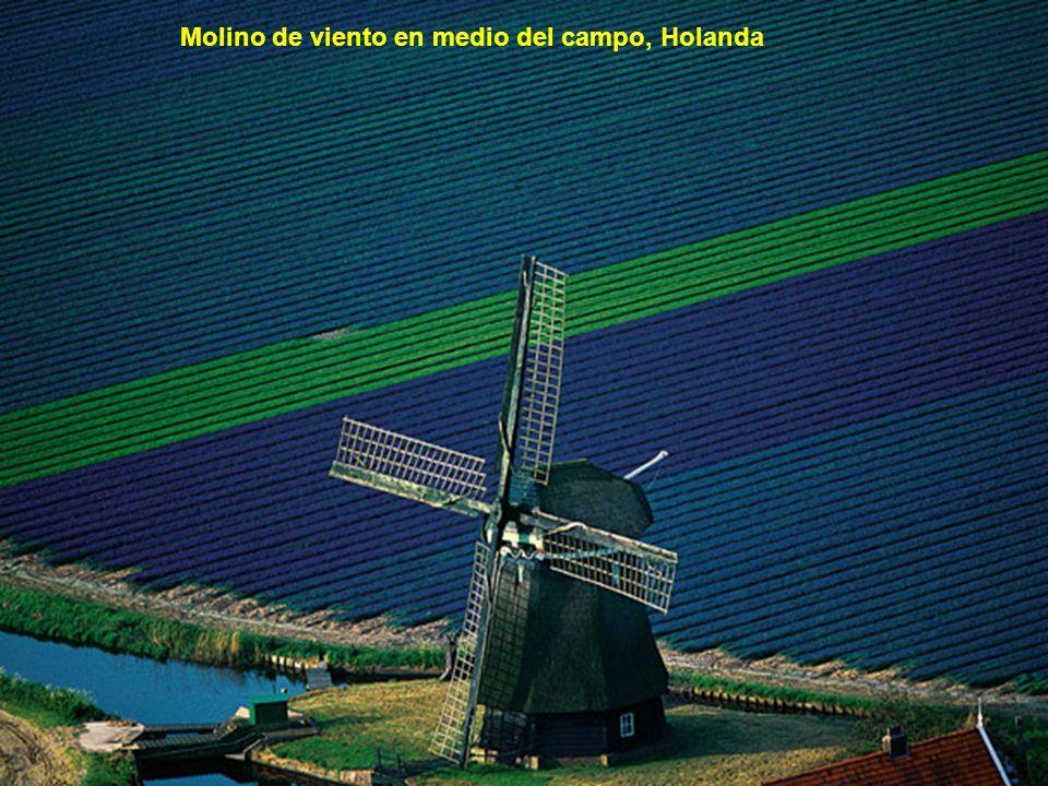 Molino de viento en medio del campo, Holanda