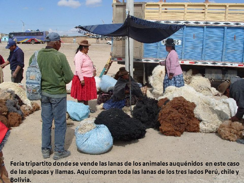 Feria tripartito donde se vende las lanas de los animales auquénidos en este caso de las alpacas y llamas.