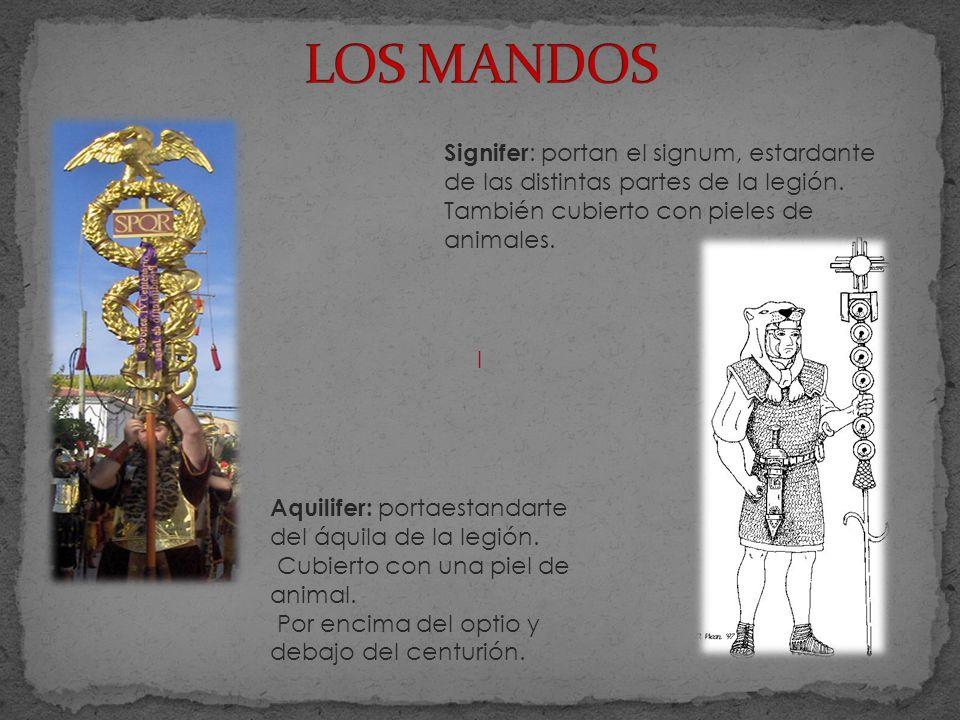 LOS MANDOS Signifer: portan el signum, estardante de las distintas partes de la legión. También cubierto con pieles de animales.