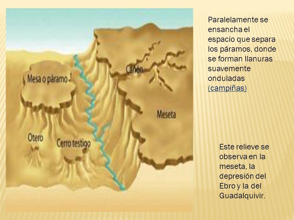 Paralelamente se ensancha el espacio que separa los páramos, donde se forman llanuras suavemente onduladas (campiñas)