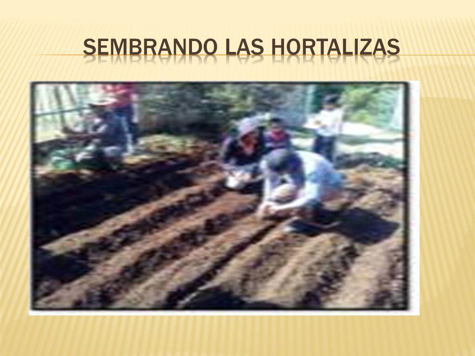 sembrando las hortalizas