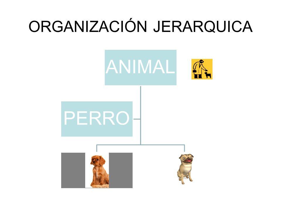 ORGANIZACIÓN JERARQUICA