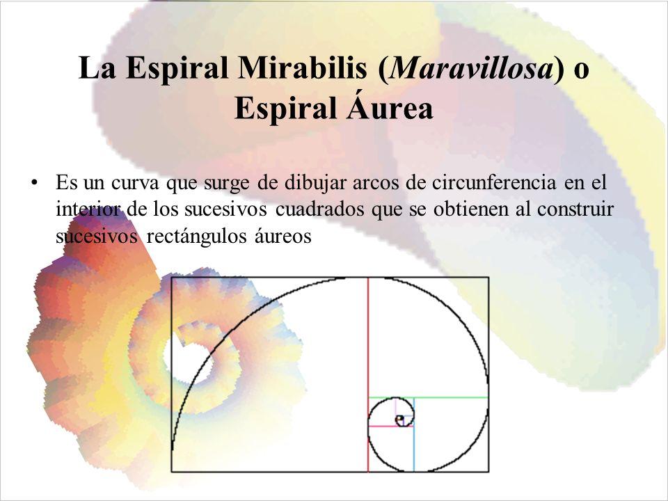 La Espiral Mirabilis (Maravillosa) o Espiral Áurea