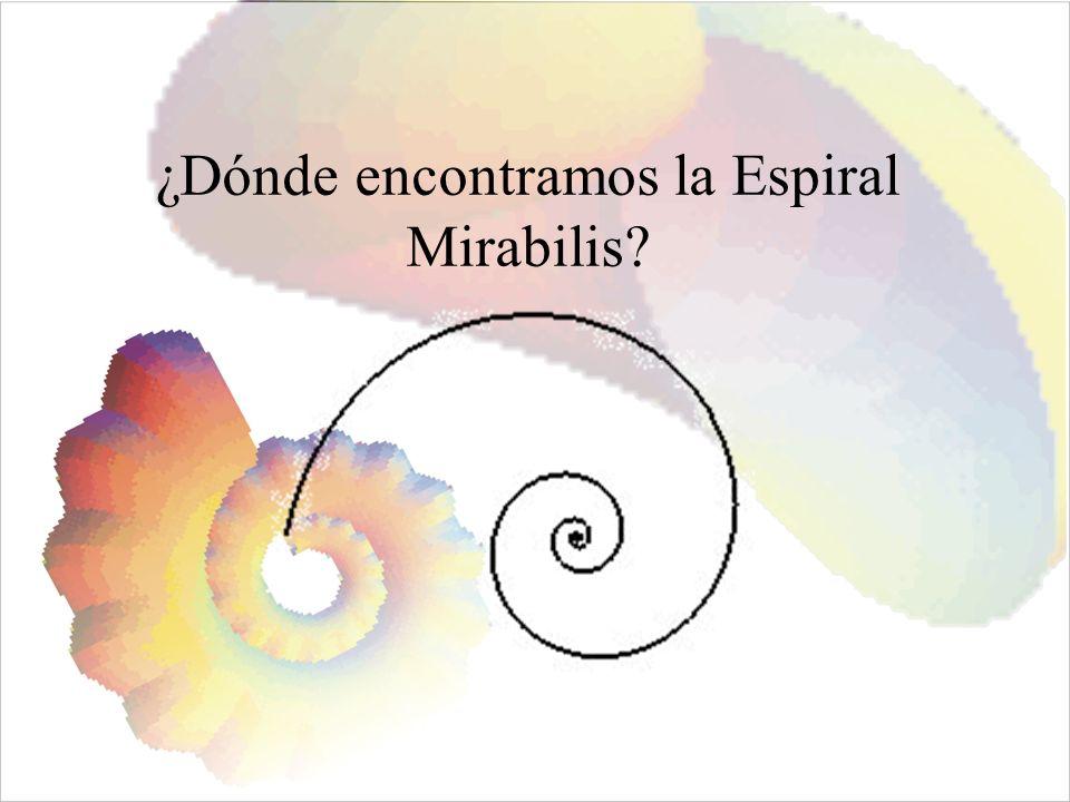 ¿Dónde encontramos la Espiral Mirabilis