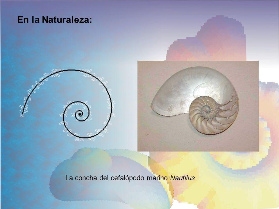 En la Naturaleza: La concha del cefalópodo marino Nautilus