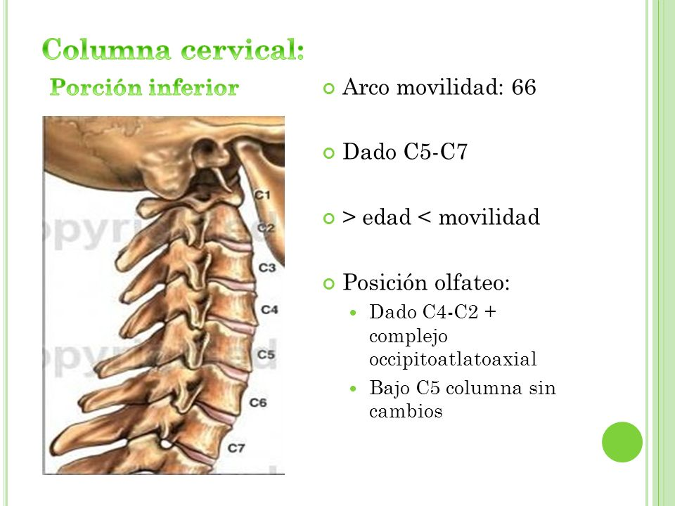 Columna cervical: Porción inferior