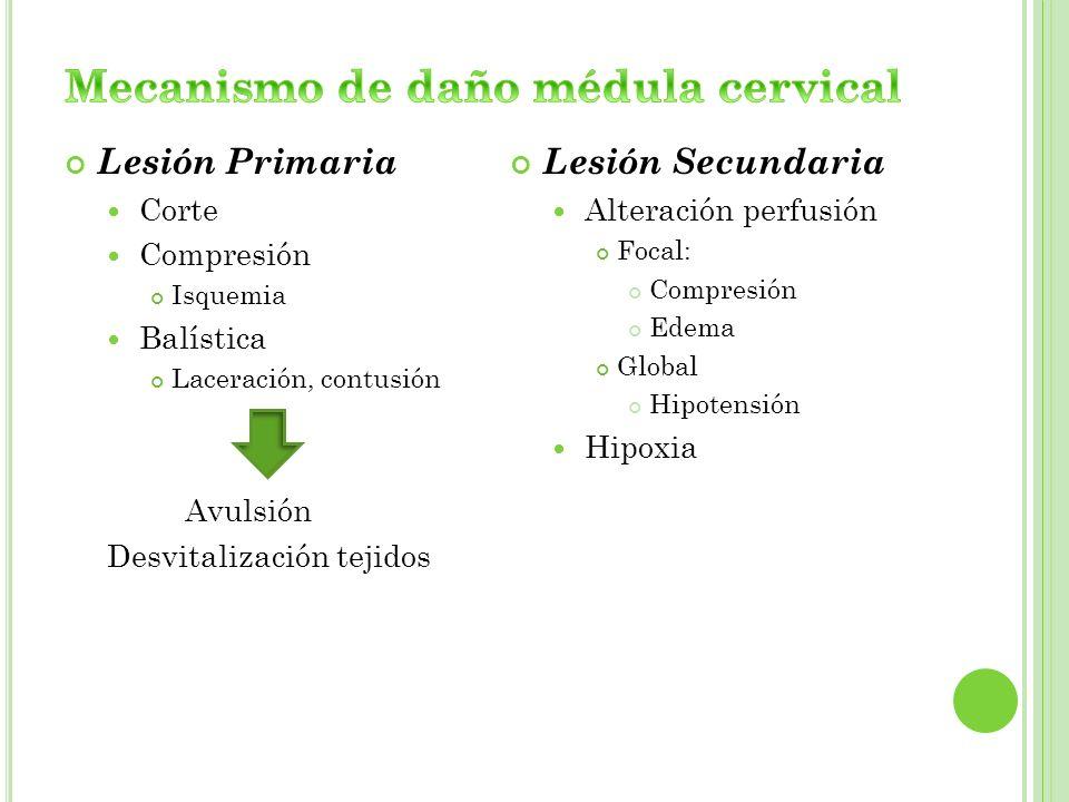 Mecanismo de daño médula cervical