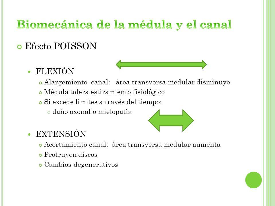 Biomecánica de la médula y el canal