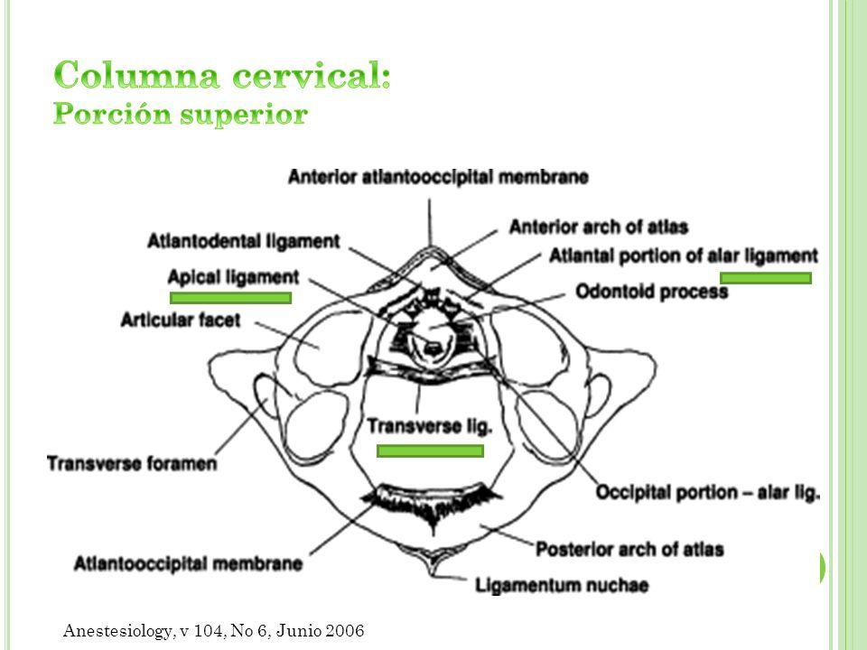 Columna cervical: Porción superior