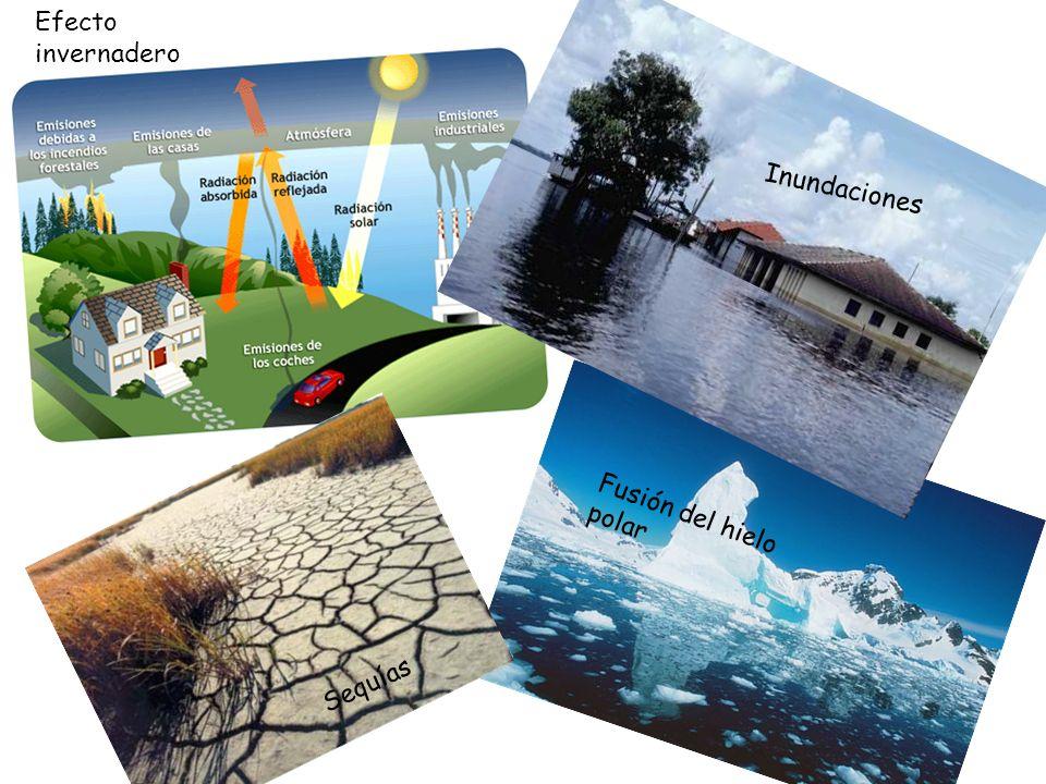 Efecto invernadero Inundaciones Fusión del hielo polar Sequías