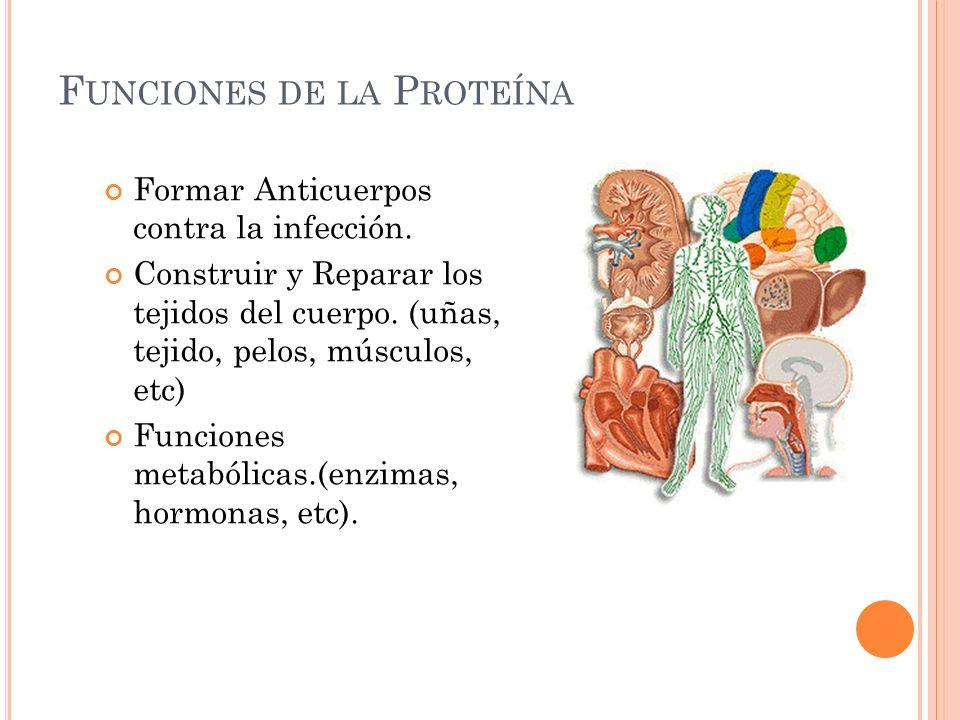 Funciones de la Proteína