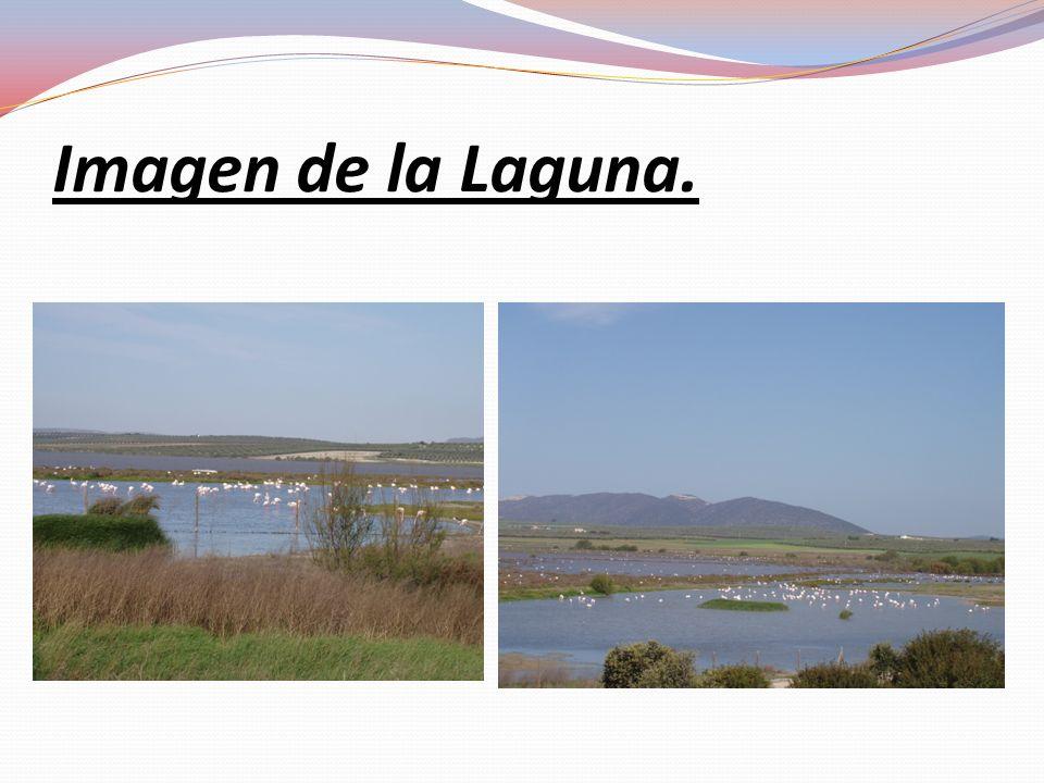 Imagen de la Laguna.
