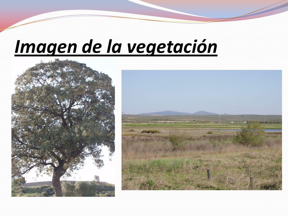Imagen de la vegetación
