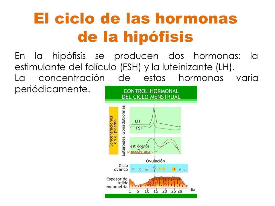 El ciclo de las hormonas de la hipófisis