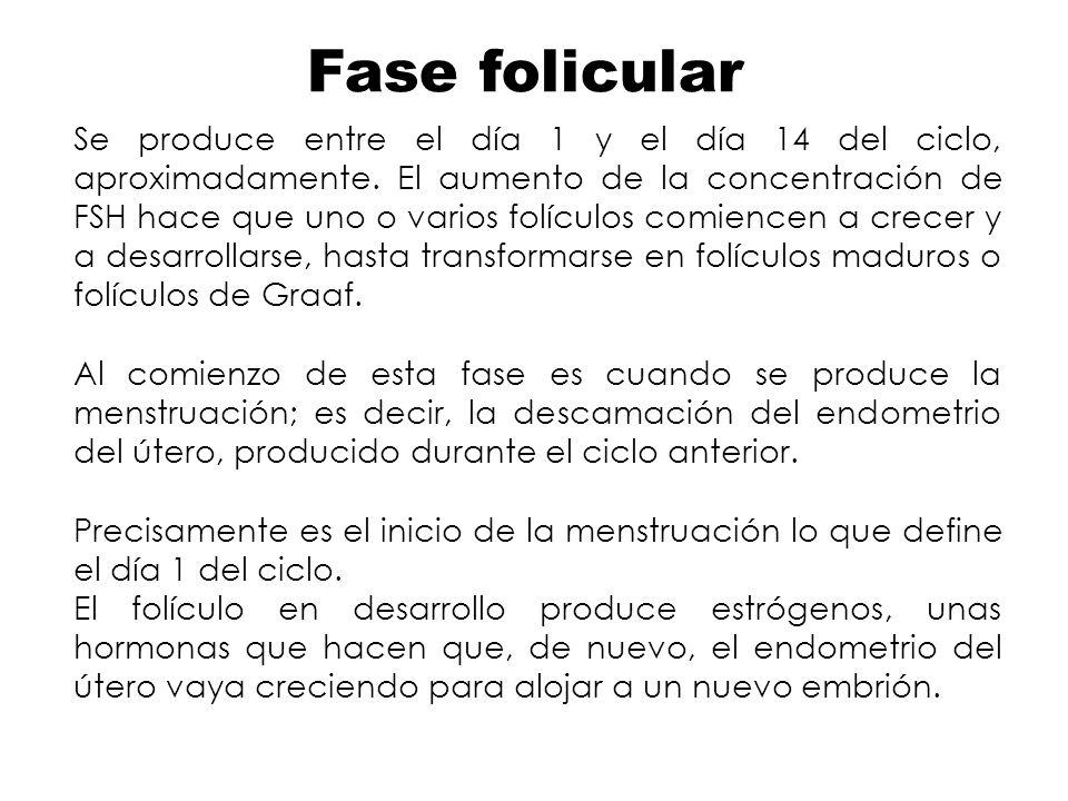 Fase folicular