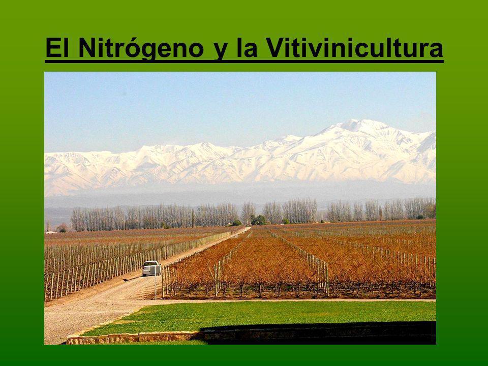 El Nitrógeno y la Vitivinicultura