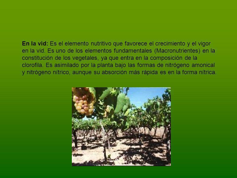 En la vid: Es el elemento nutritivo que favorece el crecimiento y el vigor en la vid.