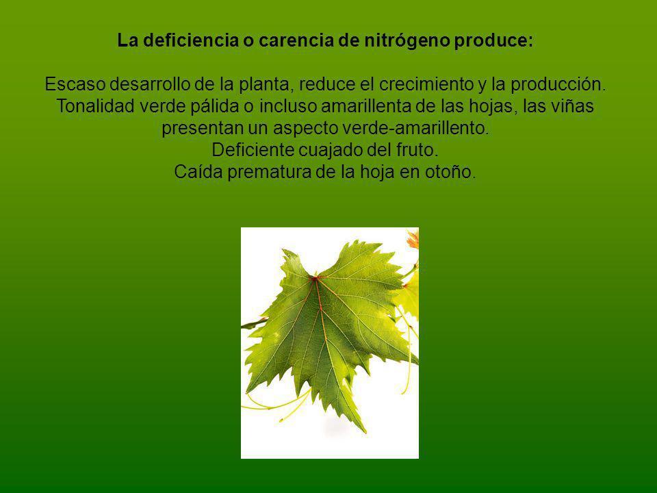 La deficiencia o carencia de nitrógeno produce:
