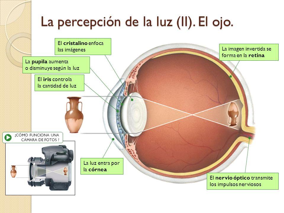 La percepción de la luz (II). El ojo.