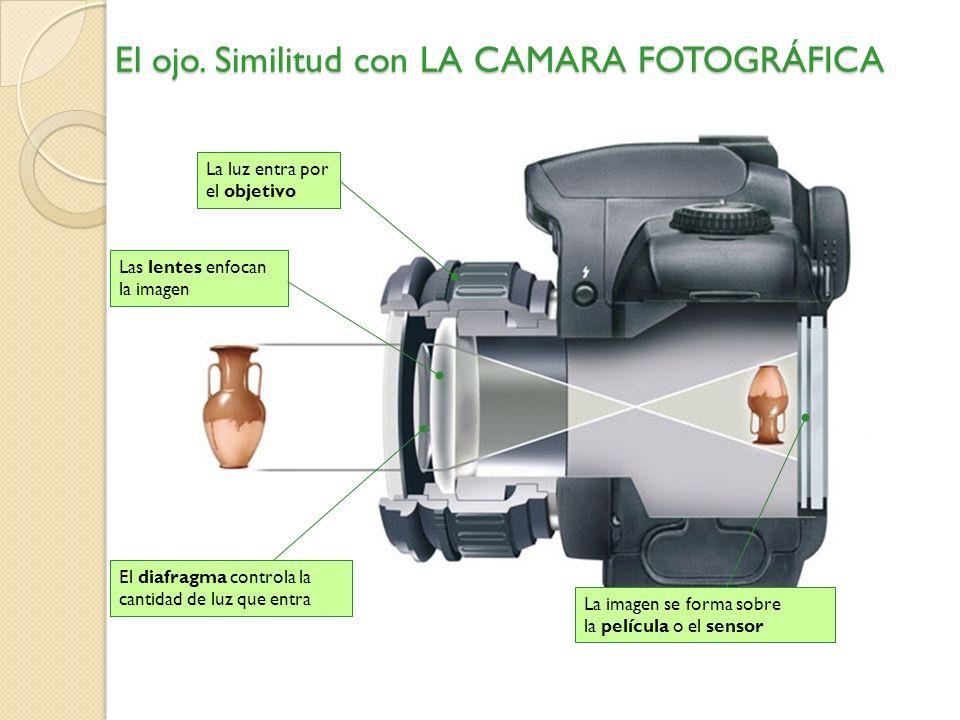 El ojo. Similitud con LA CAMARA FOTOGRÁFICA