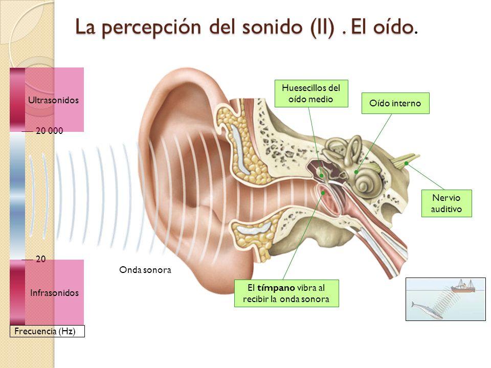 La percepción del sonido (II) . El oído.
