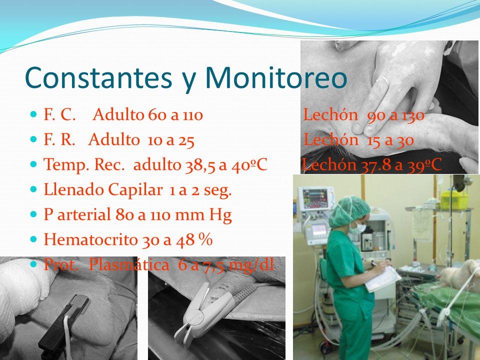 Constantes y Monitoreo