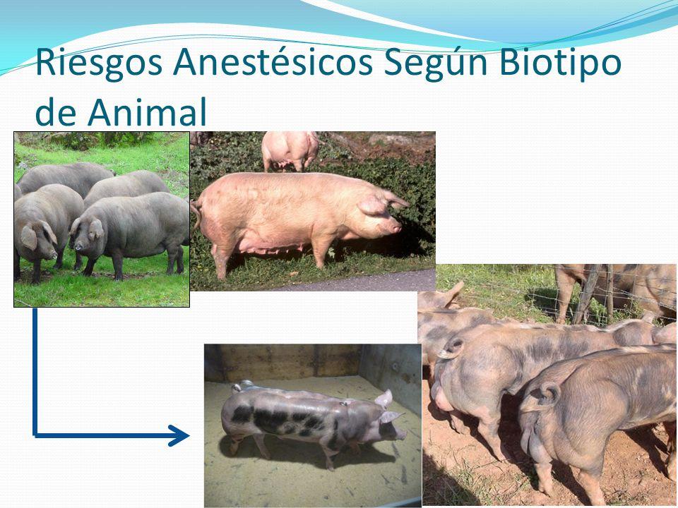 Riesgos Anestésicos Según Biotipo de Animal