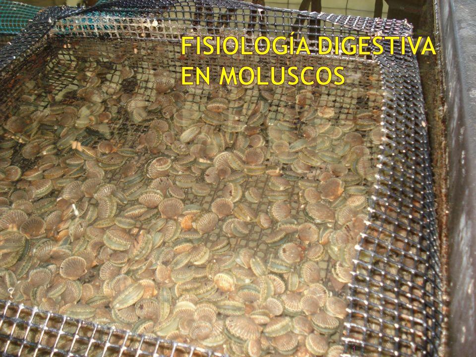 Fisiología Digestiva en Moluscos