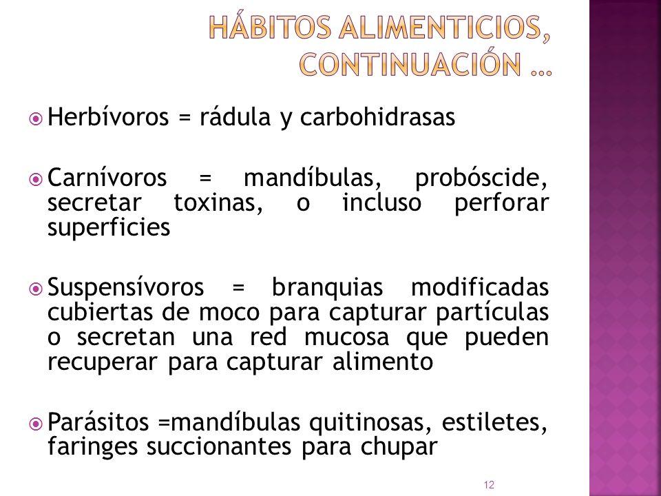 Hábitos alimenticios, continuación …