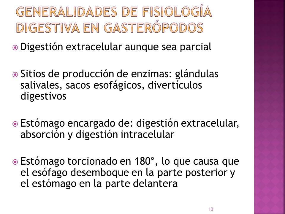 Generalidades de fisiología digestiva en gasterópodos