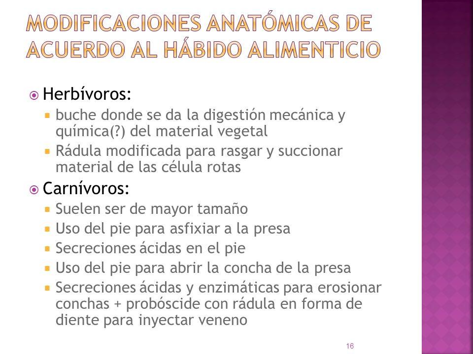 MODIFICACIONES ANATÓMICAS DE ACUERDO AL HÁBIDO ALIMENTICIO