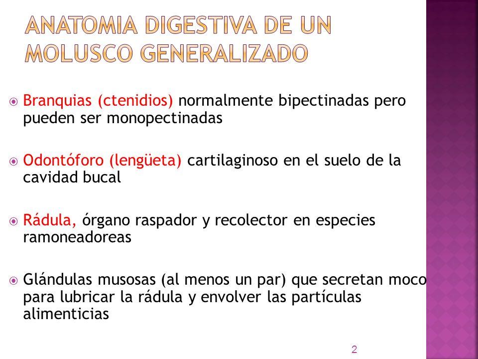 ANATOMIA DIGESTIVA DE UN MOLUSCO GENERALIZADO