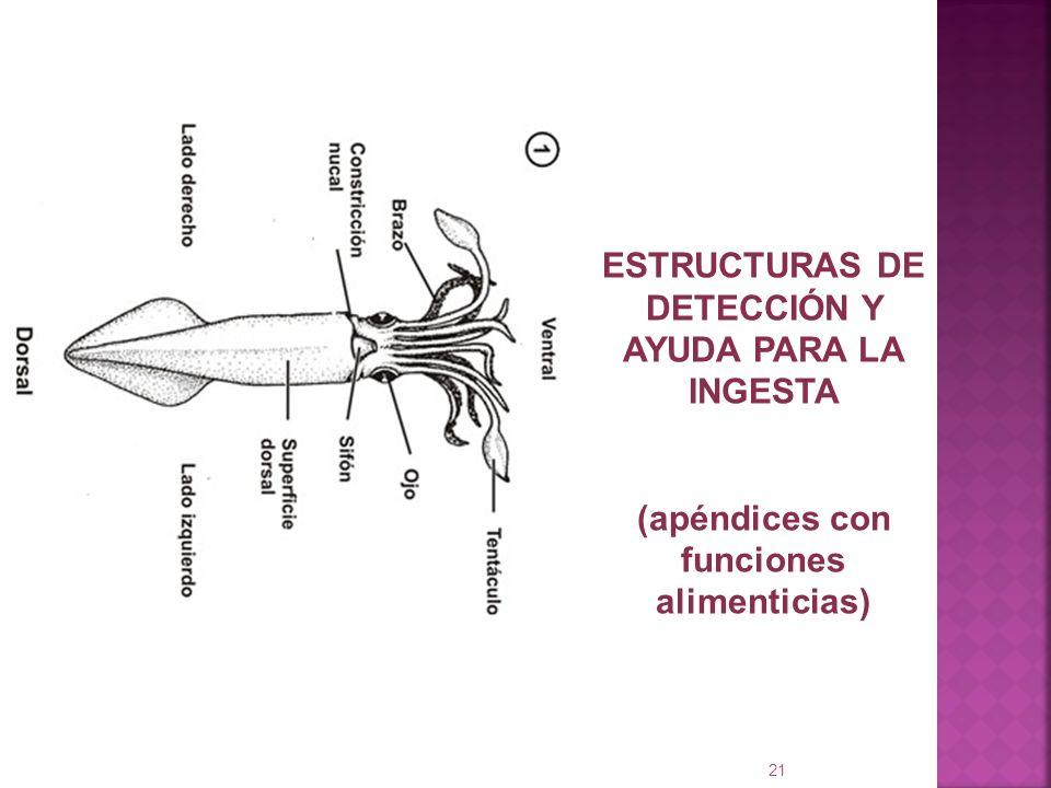 ESTRUCTURAS DE DETECCIÓN Y AYUDA PARA LA INGESTA