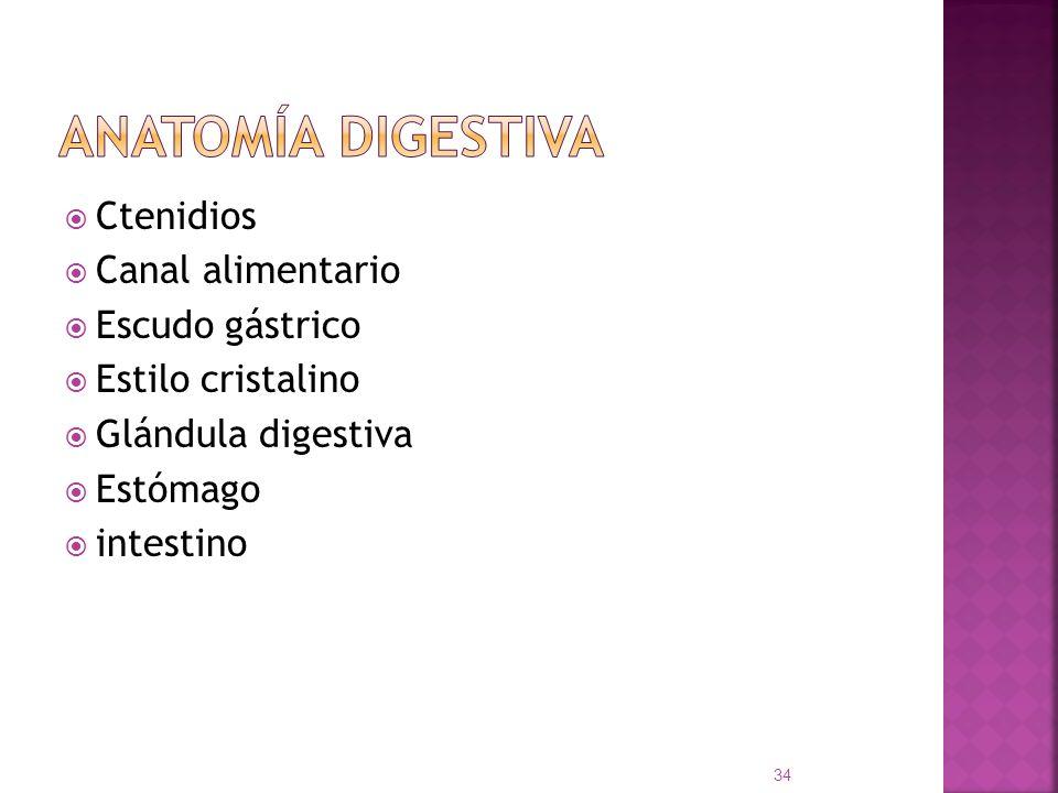 Anatomía digestiva Ctenidios Canal alimentario Escudo gástrico