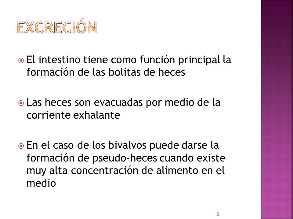 Excreción El intestino tiene como función principal la formación de las bolitas de heces.